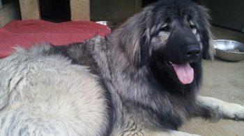 Nuova, il cane di Isaia Schena valseriananews