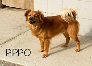 PIPPO cerca casa