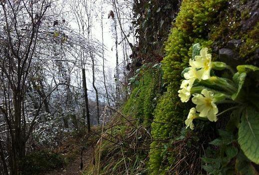 Meteo – Da martedì un assaggio di primavera in Val Seriana