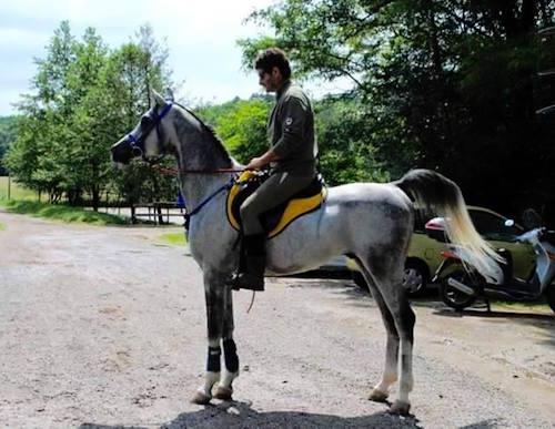 cavallo-smarrito-provagliodiseo