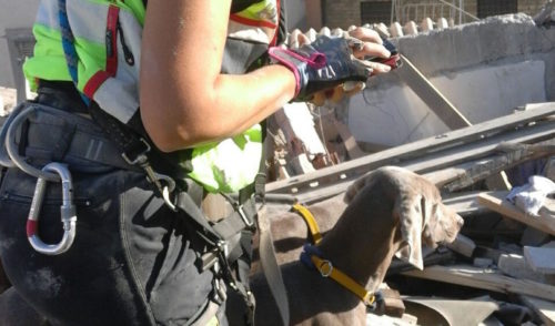 Tra le macerie uomini e cani e la speranza di trovare qualcuno in vita