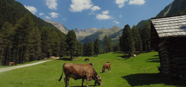 Coldiretti, la montagna riparte dagli alpeggi, +46% dal 2006