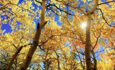 Meteo – Inizio d'autunno decisamente estivo