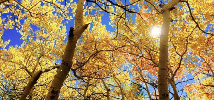 Meteo – Fine settimana soleggiato e mite