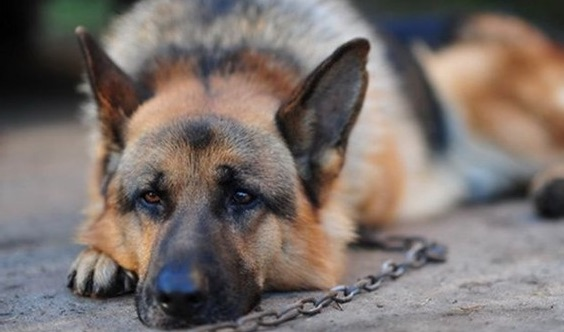 Quando la detenzione del cane configura il reato di abbandono degli animali