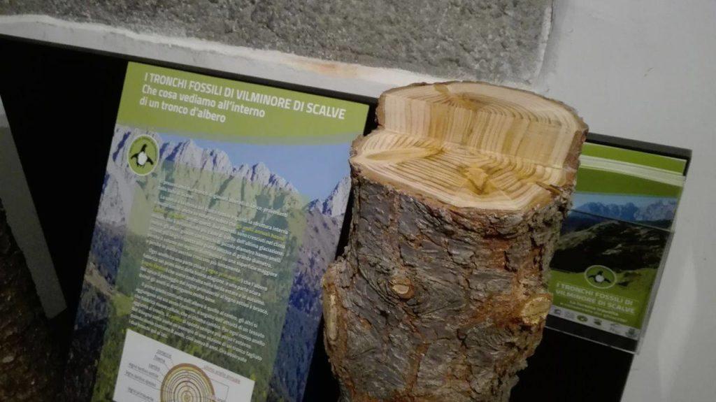 tronchi-fossili-vilminore-scalve