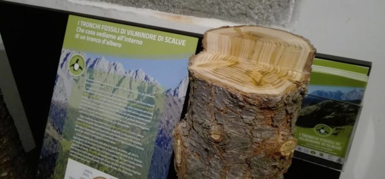 Tronchi fossili di 50 mila anni fa, una scoperta unica a Vilminore di Scalve