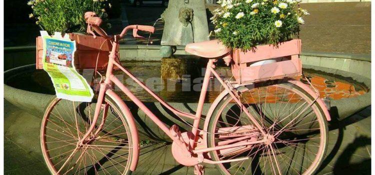 """""""Clusone in Fiore"""", mostra mercato di fiori e piante sull'altopiano baradello"""