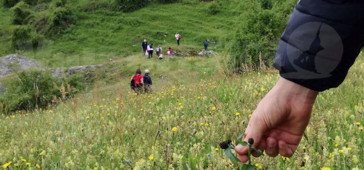 Alla scoperta dei segreti delle erbe spontanee alla Fattoria Ariete