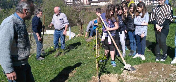 Vilminore, i ragazzi piantano 10 ciliegi nell'area camper