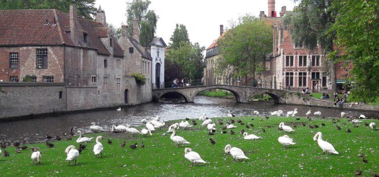 Bruges, la città dove gli anatroccoli si trasformano in cigni (zen)