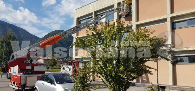 Nido di vespe all'istituto Romero di Albino, sul posto i vigili del fuoco