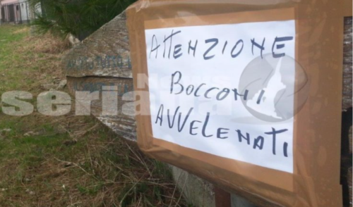 Cani avvelenati sul Monte Grem, 3 casi in 10 giorni