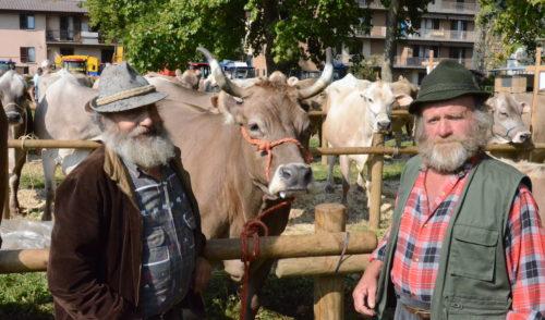 Clusone: nuova location per la Mostra Zootecnica