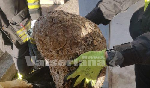 Nido di vespe nel loculo del cimitero a Semonte, intervengono i vigili del fuoco