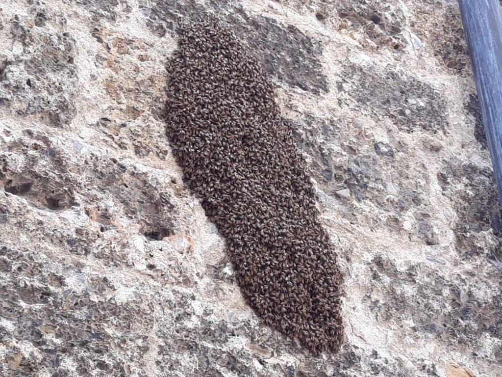 Sciame d 39 api sulla facciata della basilica di gandino for Cabine di querce reali amano va