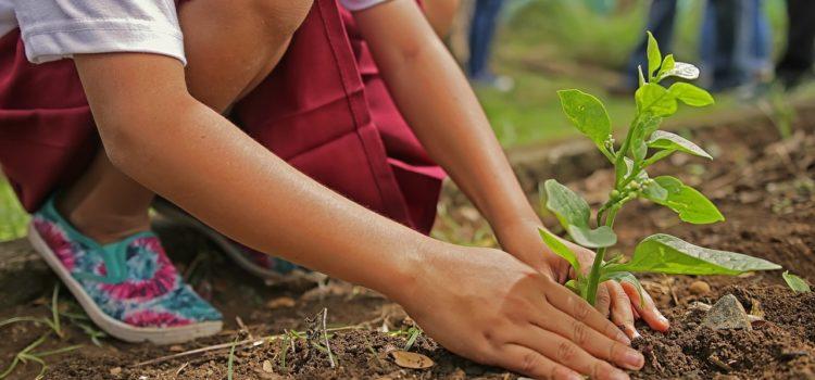 Investire consapevolmente – Mondo del risparmio e giardinaggio, cosa hanno in comune?