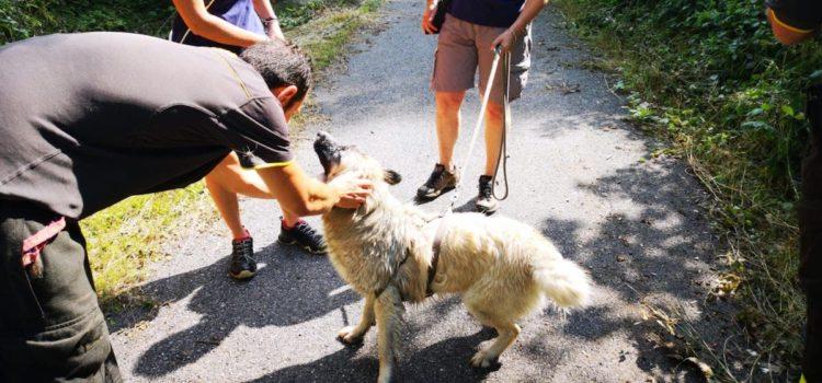 Parre, cane nel canale salvato dai Vigili del fuoco