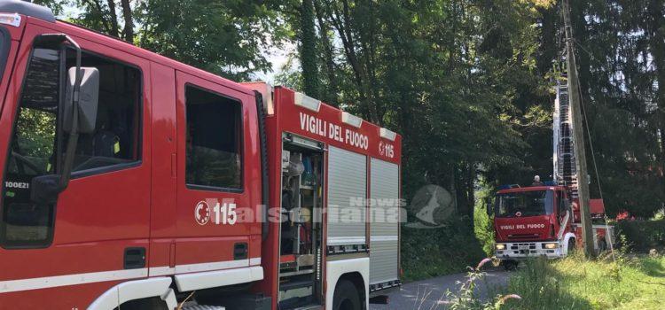 Pianta pericolante a Clusone, sul posto i Vigili del fuoco