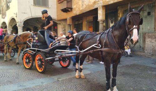 Clusone: 100 cavalli sfilano sotto l'orologio – Foto