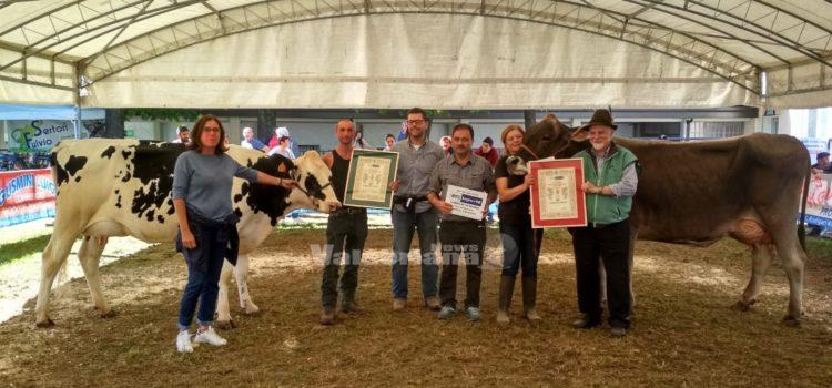 Fiera Zootecnica di Clusone: il titolo di Miss Regina agli allevatori di Rovetta e Aviatico