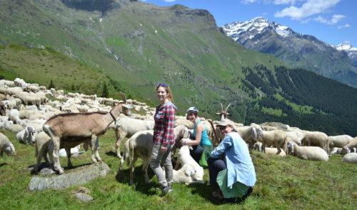 Chiuso il progetto Pasturs: 50 volontari impegnati in 9 alpeggi delle Alpi orobiche bergamasche