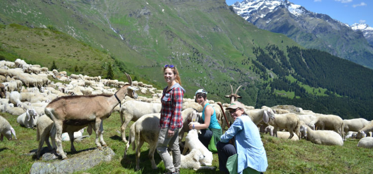 """Il progetto """"Pasturs"""" diventa un documentario, proiezioni a Valbondione e Gandellino"""