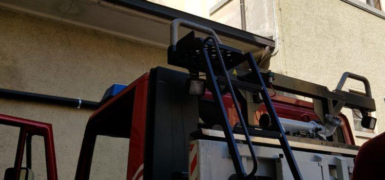Emergenza calabroni: intervento dei Vigili del fuoco all'istituto Fantoni di Clusone