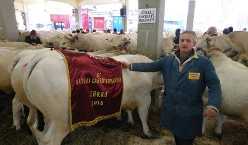 Altin Xhepa di Gandino sul podio della prestigiosaFiera del Bue Grasso di Carrù