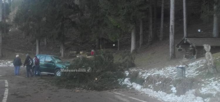 Vento forte in Val Seriana: a Songavazzo albero cade e travolge un'auto nel parcheggio