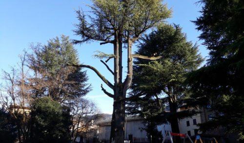 """""""Nuova vita al Cedro"""", a Gandino èfesta condivisa"""