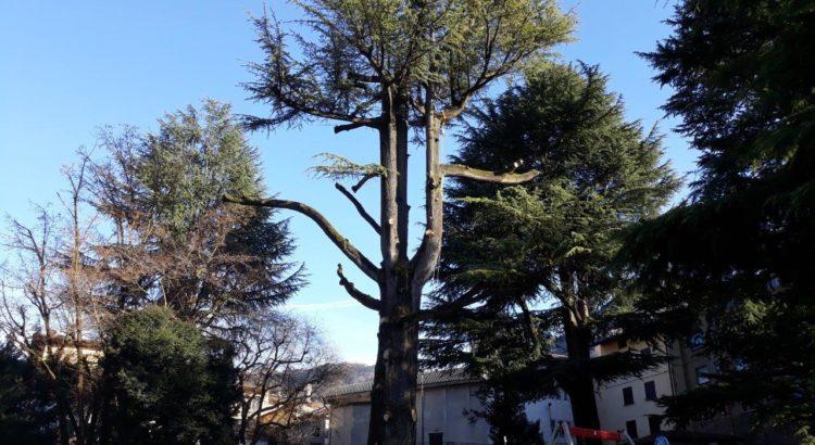 Addio al cedro del Parco di Gandino, ma avrà una nuova vita