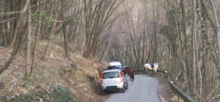 Cade da cavallo a Casnigo, 29enne in ospedale