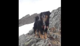 Lonno, scomparso il cane che cura gli anziani – l'appello