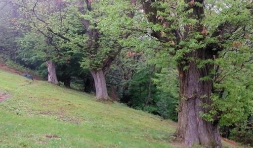Pradalunga: domenica 19 maggio passeggiata alla scoperta dei castagneti