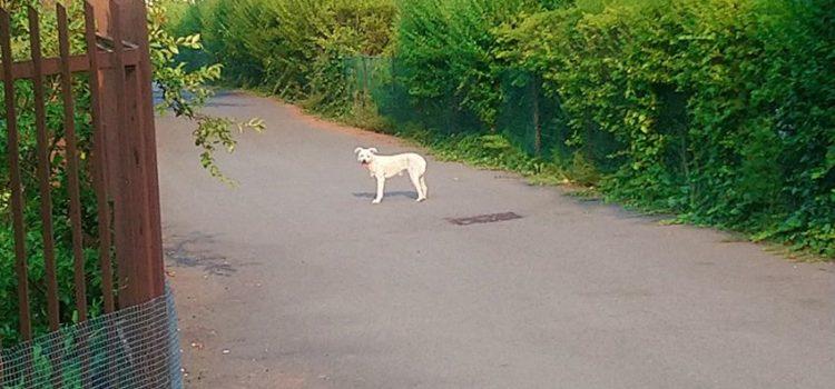 Clusone, Sos per un cane abbandonato