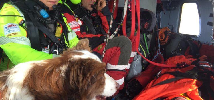 Giornata internazionale del cane, grazie ai cani da soccorso