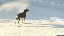 Sos amici a 4 zampe – cane disperso ad Onore