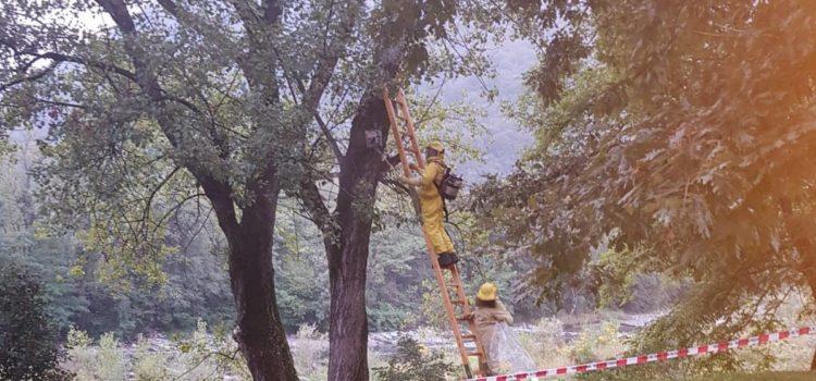 Cene, calabroni al parco: arrivano i vigili del fuoco