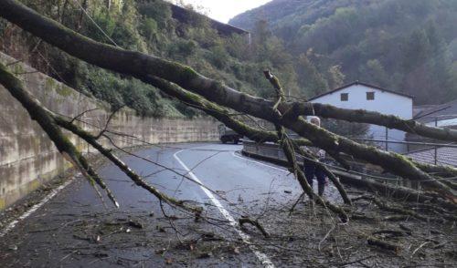 Pianta caduta nel fondovalle a Gandino, strada riaperta