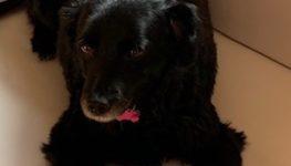 Sos amici a 4 zampe – Trudy smarrito a Casnigo