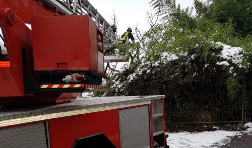 Pradalunga, albero cade e trancia i cavi del telefono